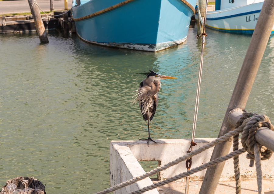 Heron at Fulton Harbor